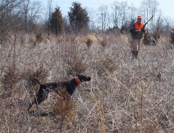 Pheasant and Quail Hunting Gettysburg PA Southern PA - S&M Hunting Lodge